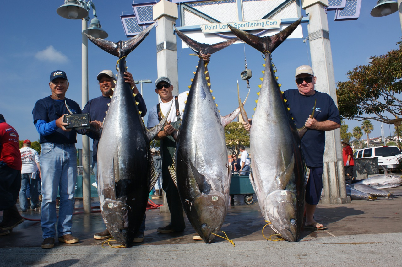 Point loma sportfishing three 300 pound tuna for charlie for Charlie s fishing report