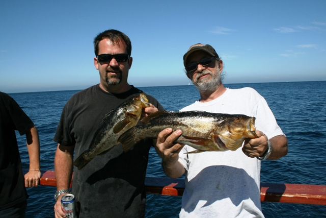 Outrider kicking bass 976 tuna the original leader in for 22nd street landing fish report