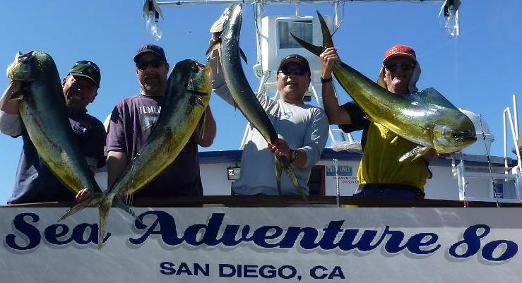 sea adventure 80 scores big dorado yellowtail hit 976