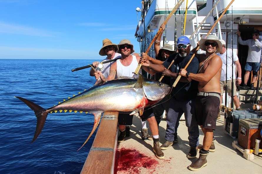 For a complete season schedule on the royal polaris click for Southern california saltwater fishing report