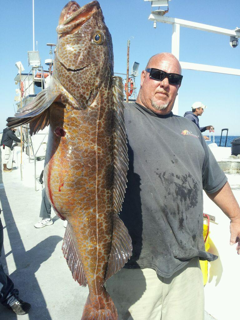 News 976 tuna the original leader in fish reports 1 for Pierpoint landing fish counts