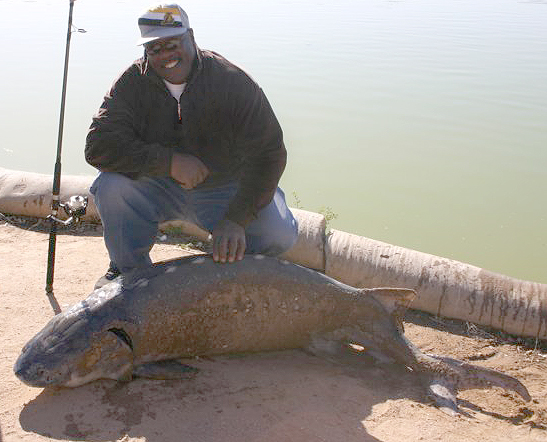 268 pound sturgeon hesperia lake 976 fresh freshwater for Hesperia lake fishing report