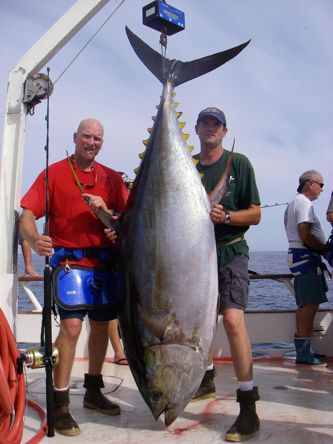 Life is like fishing for Does tuna fish have scales