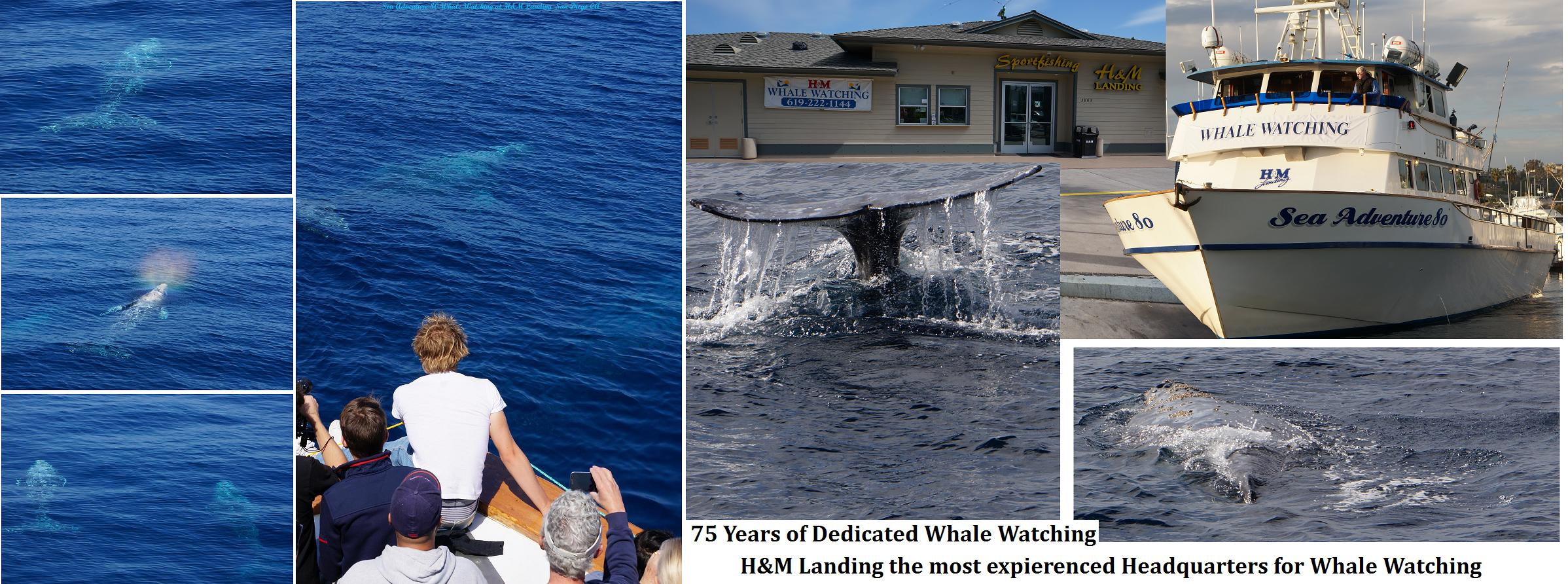 500 whale watchers in 3 day yep the folks are interested for H m landing fishing report